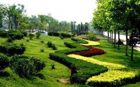 绿植绿化养护